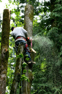 Tree cutting service you can trust in