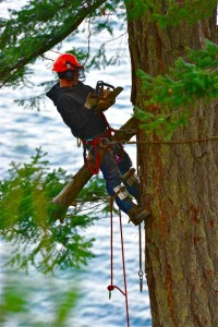 Tree removal service you can rely on
